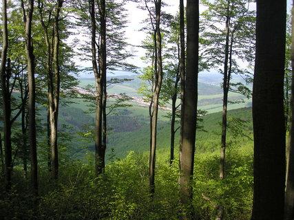 FOTKA - květen 2015, pohled mezi stromy
