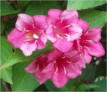 FOTKA - ještě se najdou květy
