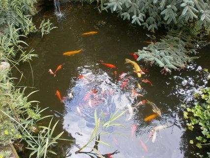 FOTKA - barevné rybičky