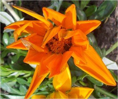 FOTKA - detail oranžového květu