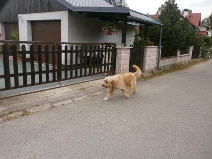FOTKA - pan pes na procházce