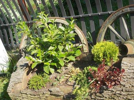 FOTKA - výzdoba u jednoho plotu