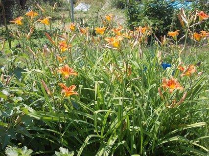 FOTKA - kveteme, záříme v zahradě