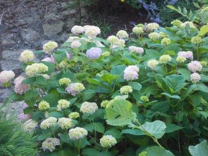 FOTKA - krásně sousedům kvetou