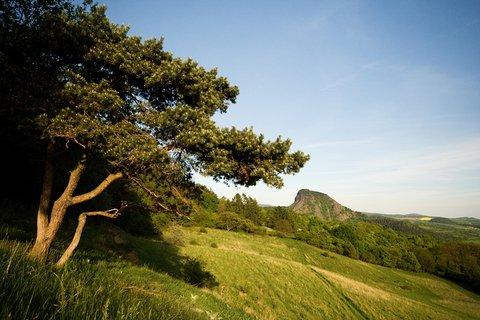 FOTKA - U křivé borovice