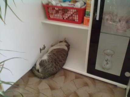 FOTKA - Moje nové místo na spaní