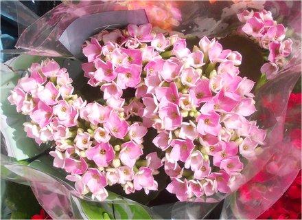 FOTKA - růžovo - bílé kvítečka