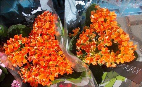 FOTKA - oranžové dvě kytičky
