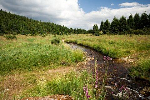 FOTKA - Flájský potok.....