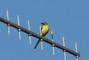 další ptáček