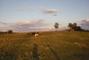 louka a ovce