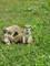 surikaty dvůr2