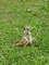 surikatí hrátky