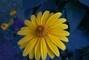 květina v zahrádce