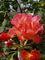 Růžový sad na Petříně - to je vůně...