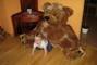 Zachrante mě - medvěd!!