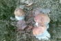 houbová  ůroda