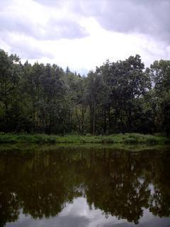 FOTKA - Pilske udolimodraz ve vode