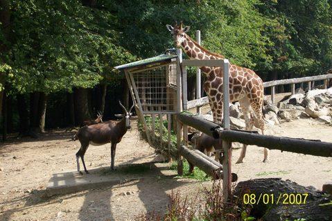 FOTKA - Zoo Lešná