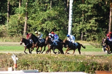 FOTKA - koně a oři:)