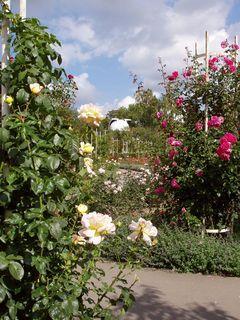 FOTKA - Růžový sad na Petříně (5)