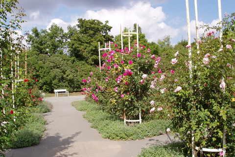 FOTKA - Růžový sad na Petříně (8)