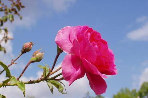 FOTKA - Růžový sad na Petříně (13)