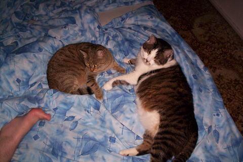 FOTKA - Příprava ke spánku