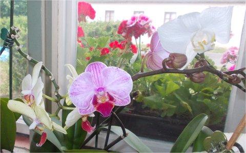 FOTKA - květy doma a i za oknem