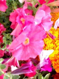 FOTKA - růžovoučké