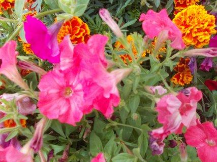 FOTKA - různé květy