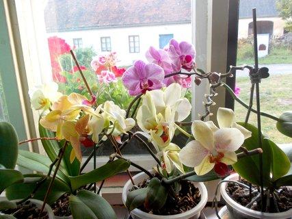 FOTKA - krásný pohled z okna mám