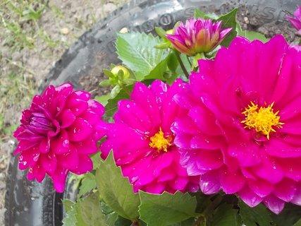 FOTKA - za  sebou jsou květy