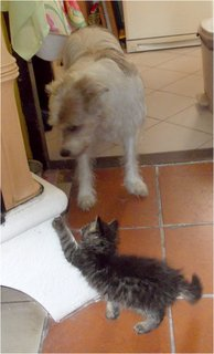 FOTKA - kotě doráží na Besinku