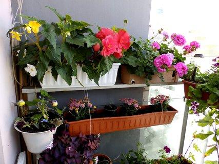 FOTKA - Rozkvetlý balkon