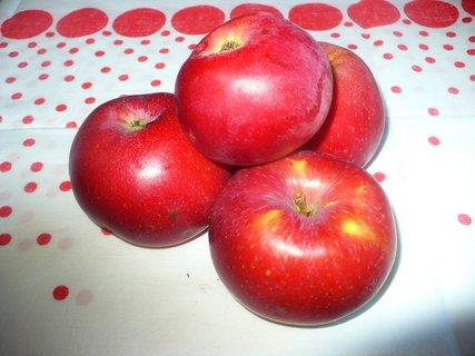 FOTKA - První letošní úroda jablek