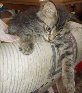 FOTKA - unavené kotě