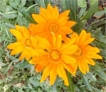 FOTKA - 4 krásné květy