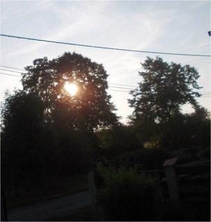 FOTKA - sluníčko juká v koruně stromu