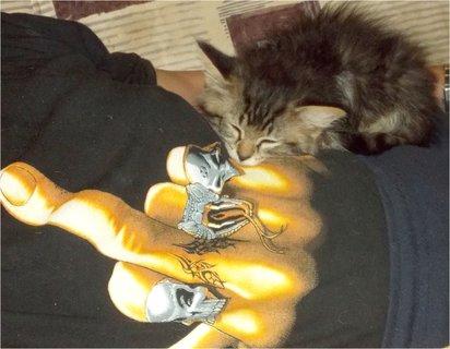 FOTKA - dobře si lehlo kotě, ten prst není na vás milé chytré ženy