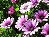 letos hezky kvetou