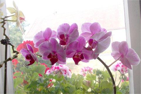 FOTKA - jsem krásná orchidejka prostě