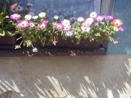 FOTKA - vypěstované květiny