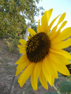 FOTKA - na slunci kvetu, ač bylo včera skoro 55 st. na slunci