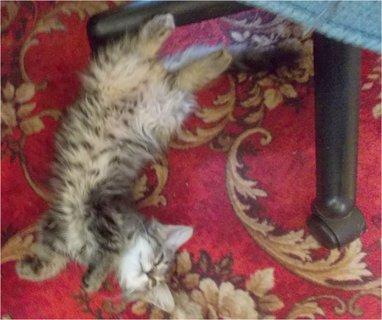 FOTKA - spím pod křeslem, kde sedí moje panička