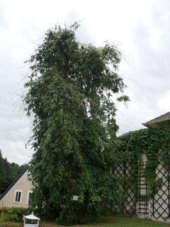 FOTKA - strom zdobící zahradu u zdi
