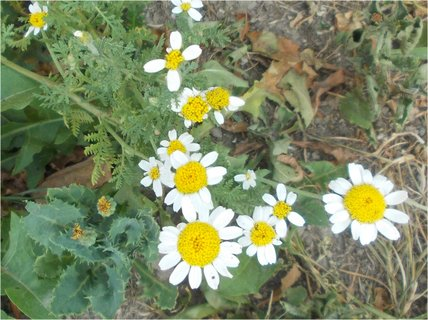 FOTKA - i Rmen kvete bez vody
