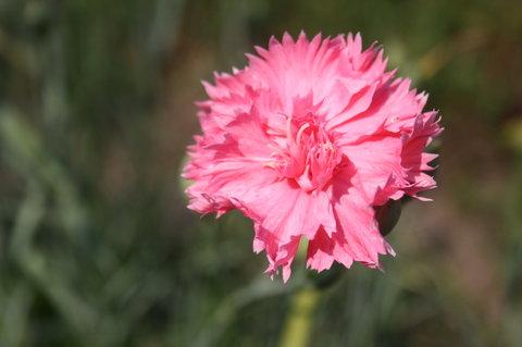 FOTKA - r�ov� katafi�t