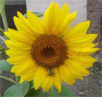 FOTKA - s včeličkou