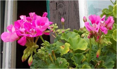 FOTKA - krásné růžové